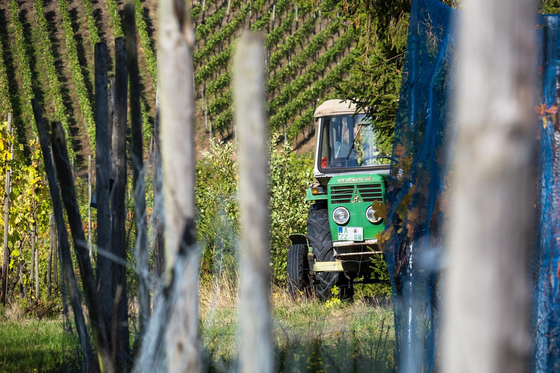 Vineyard Picking